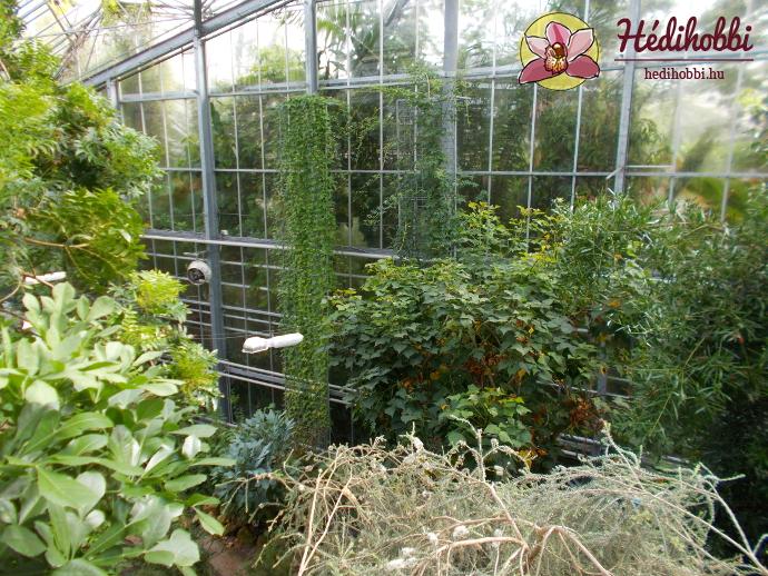 hortus-botanicus-amsterdam015