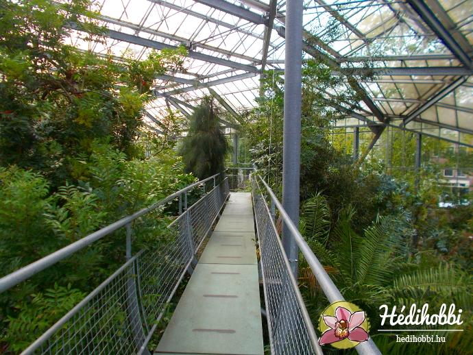 hortus-botanicus-amsterdam016