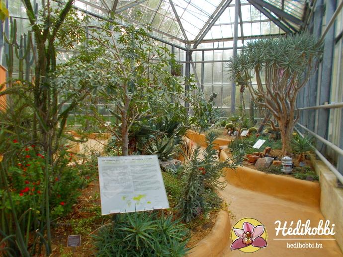 hortus-botanicus-amsterdam017