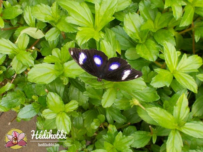 hortus-botanicus-amsterdam007