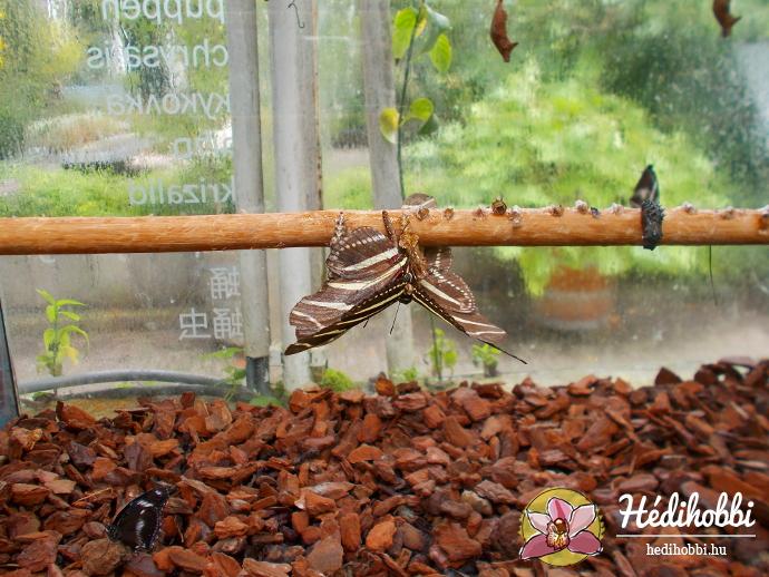 hortus-botanicus-amsterdam008