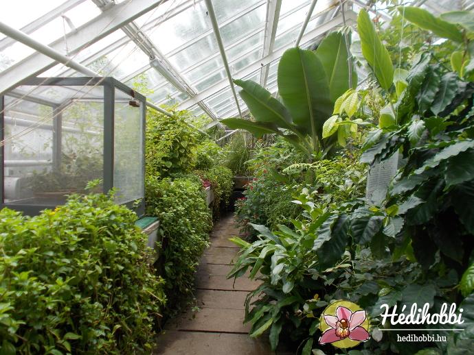 hortus-botanicus-amsterdam009