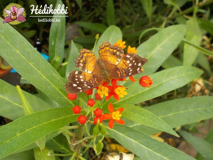hortus-botanicus-amsterdam011