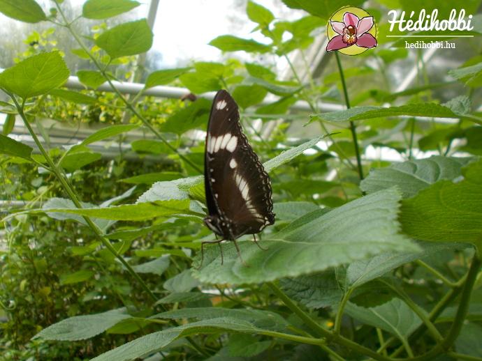 hortus-botanicus-amsterdam012