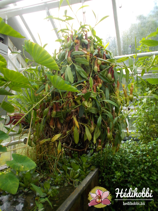 hortus-botanicus-amsterdam013