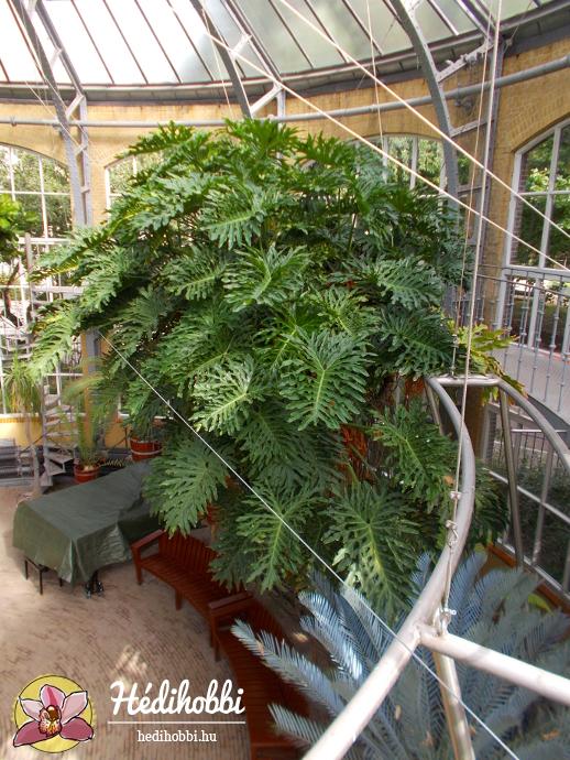 hortus-botanicus-amsterdam003