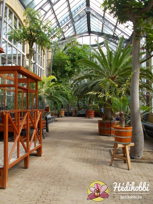 hortus-botanicus-amsterdam004