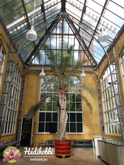 hortus-botanicus-amsterdam005