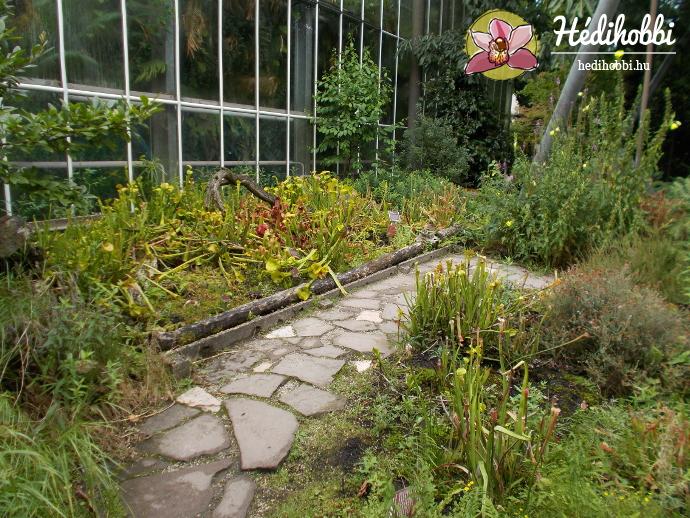 hortus-botanicus-amsterdam019