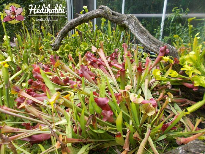 hortus-botanicus-amsterdam020