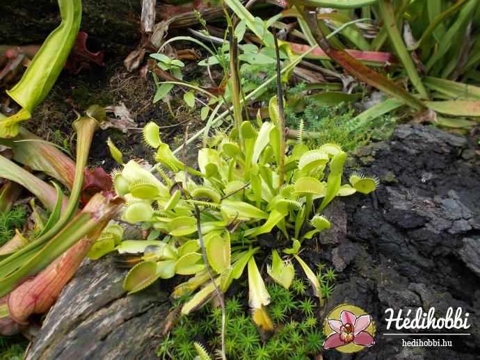 hortus-botanicus-amsterdam022