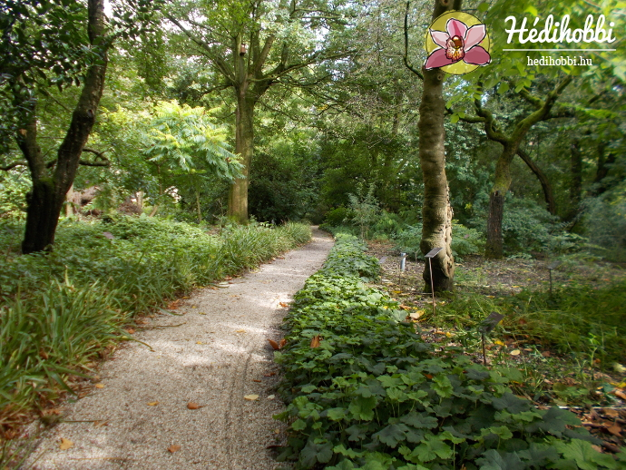 hortus-botanicus-amsterdam025
