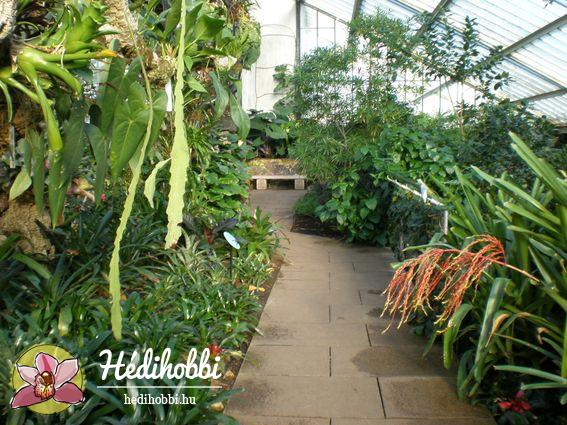 2012-11-30_Kew_008