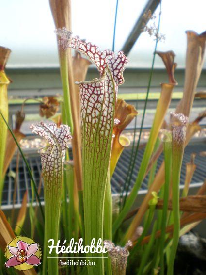 2012-11-30_Kew_017