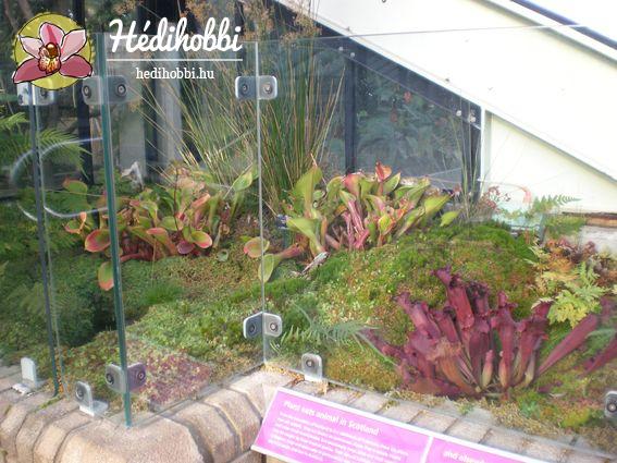 2012-11-30_Kew_019