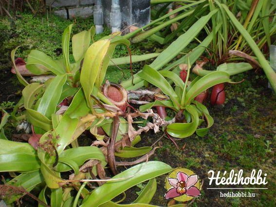 2012-11-30_Kew_021