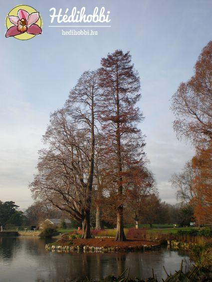 2012-11-30_Kew_023