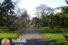 2012-11-30_Kew_002
