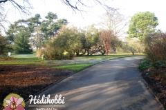 2012-11-30_Kew_003