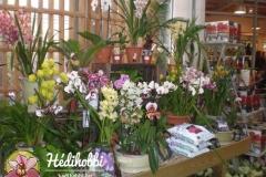 2012-11-30_Kew_027