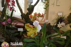 Orchidea kiállítás 2013.