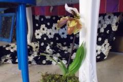 A Paphi hibrid :)